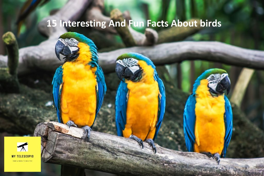 15 Interesting and fun facts about birds