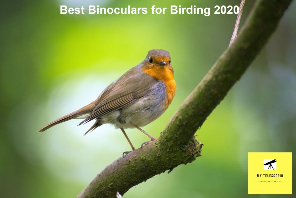 Best Binoculars for Birding 2020