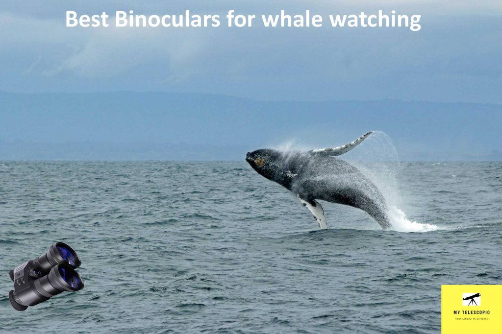 Best Binocular for whale watching