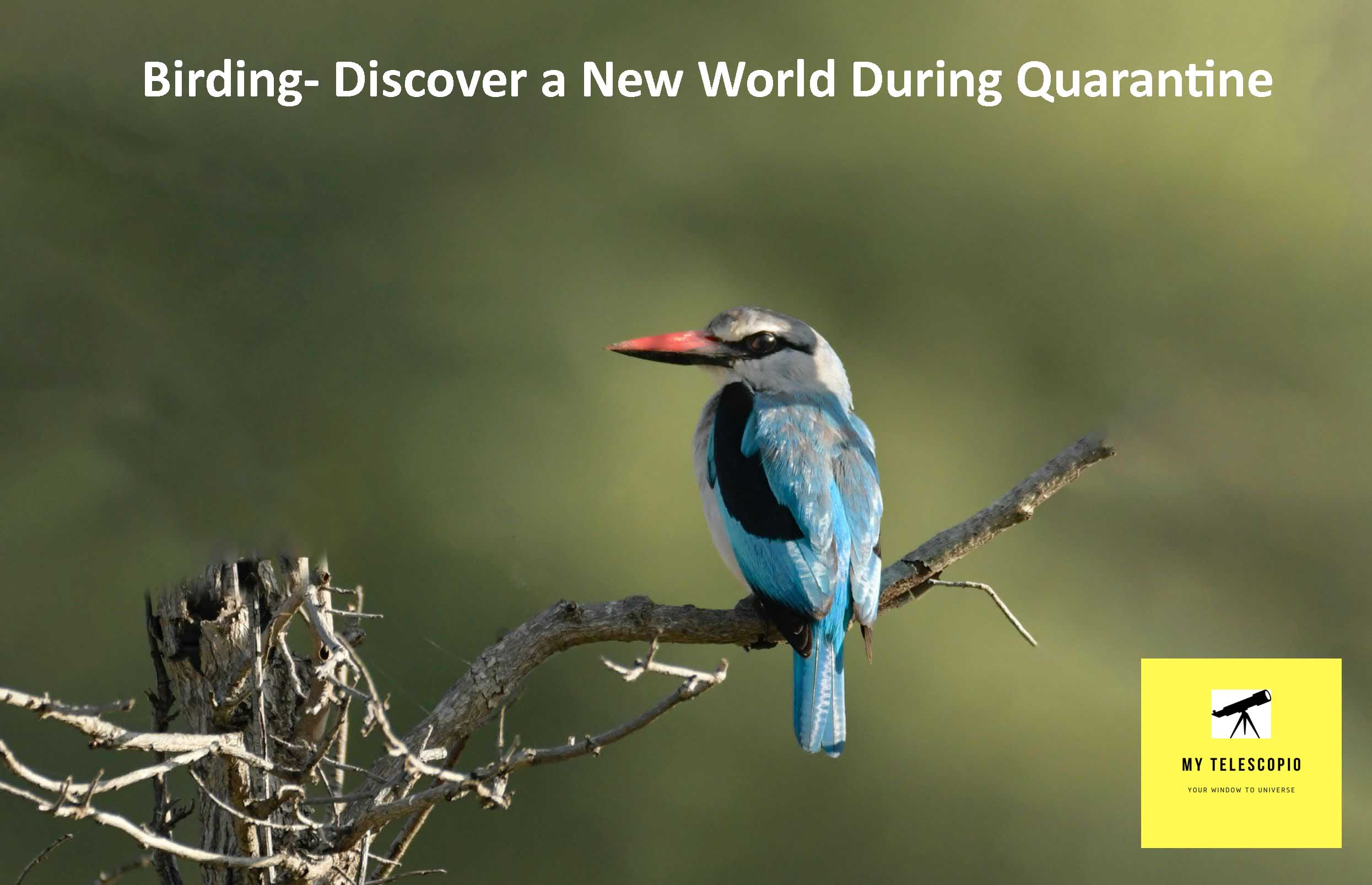 Birding- Discover a New World During Quarantine