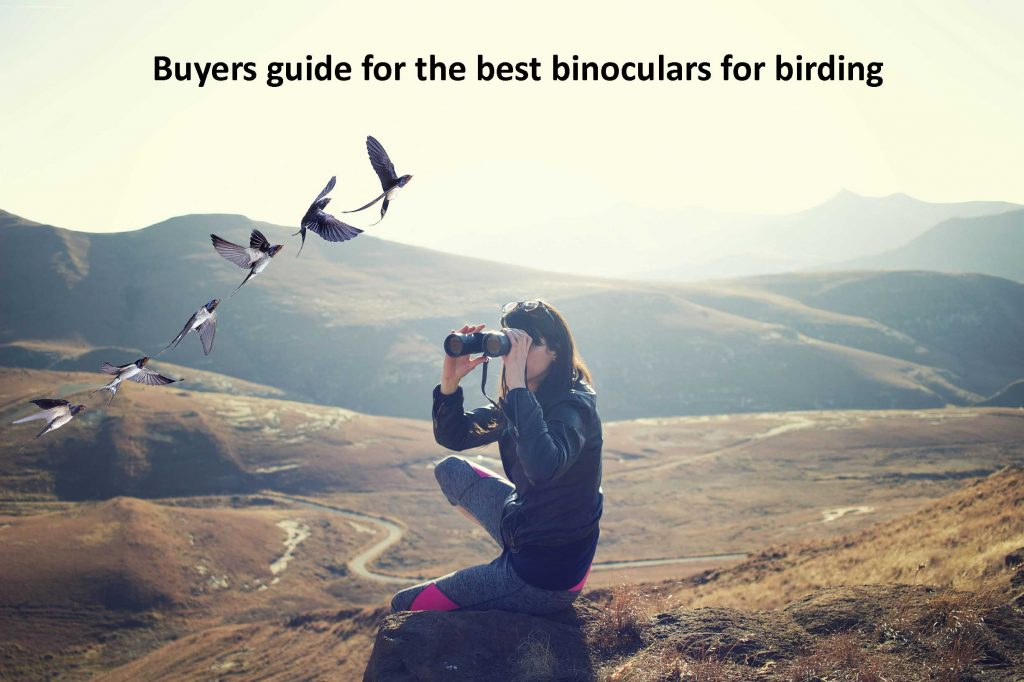 Buyers guide for the best binoculars for birding